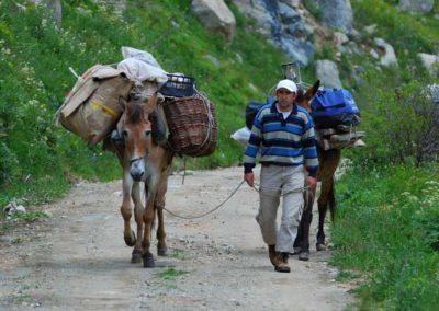 Muli e bagagli presso Olgunar