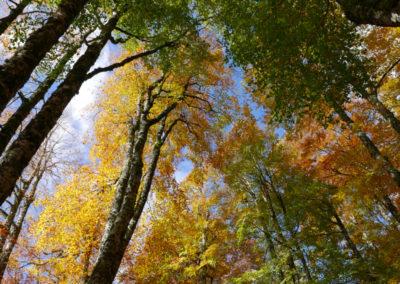 Parco d'Abruzzo, Lazio e Molise, faggeta in autunno