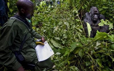 UNA TERRIBILE NOTIZIA DAI VULCANI VIRUNGA, IN CONGO
