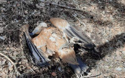MARSICA: TORNANO I CRIMINALI DEI BOCCONI AVVELENATI